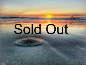 Sold Out Sand Dollar