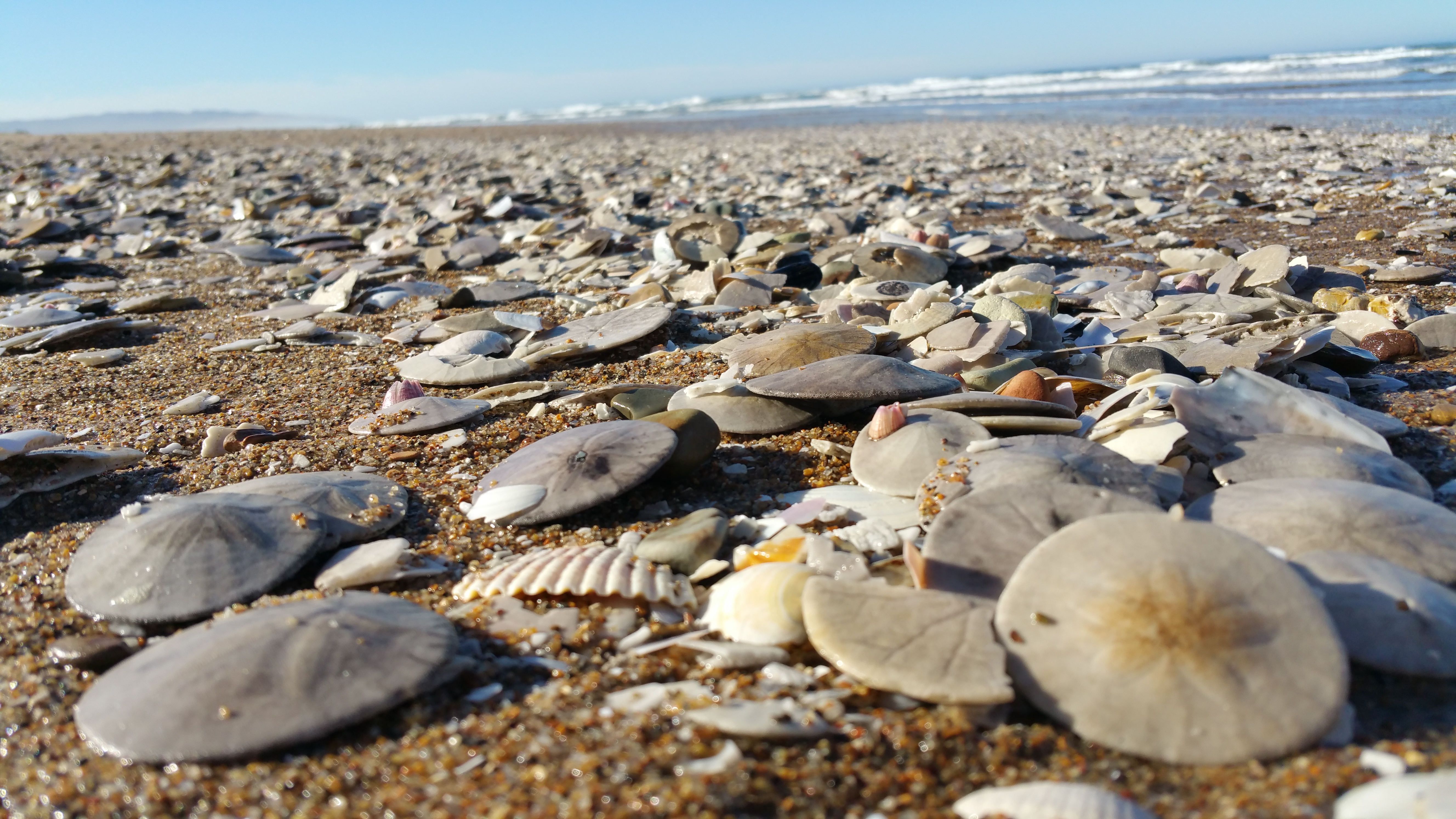 Watch How to Find Sand Dollars video